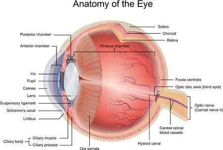 Anatomy Of The Eye Retina Ophthalmologist Gettysburg Pa Greater